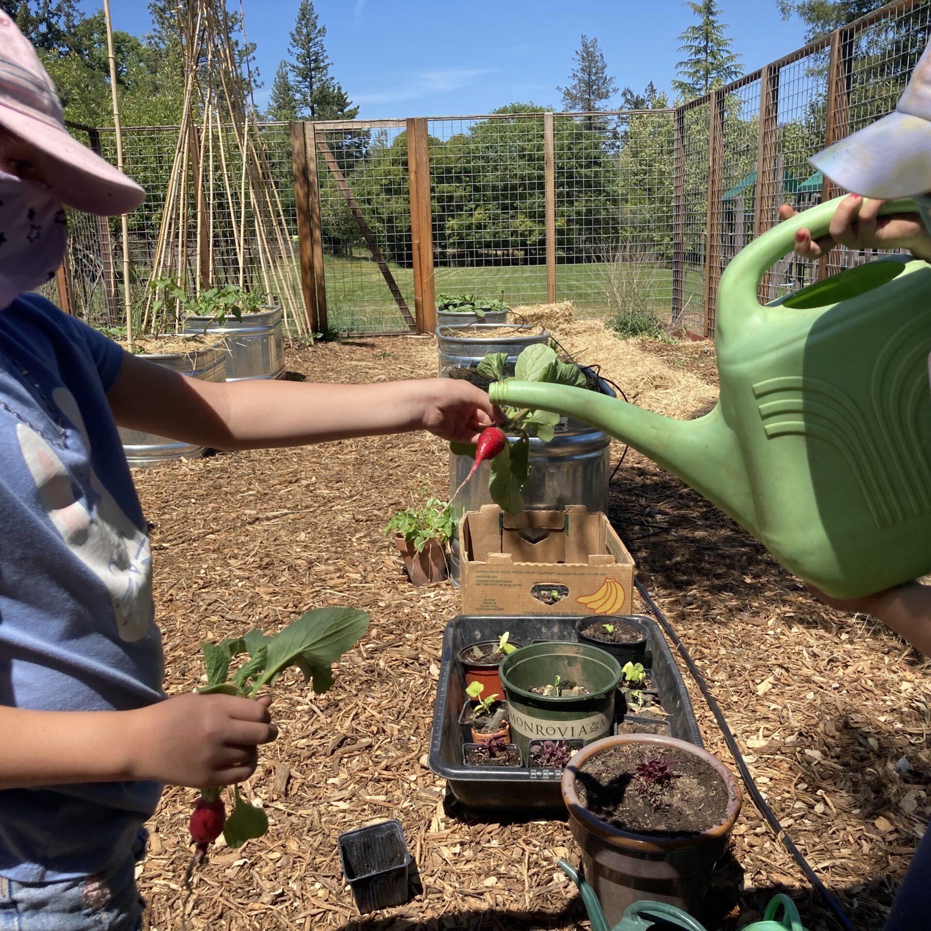 Brush Creek Gardening